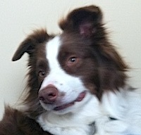 lostdog_Cooper1_w_Janet