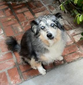 lostdog_Daisy_w_Cecilia