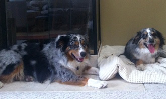 Happy Endings – Aussie Rescue SoCal