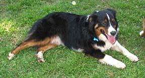 lostdog_Buddy_w_Janie