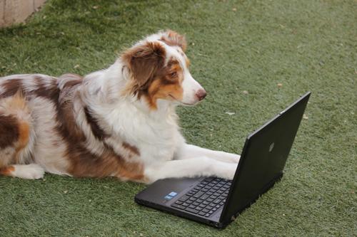 Amber Laptop